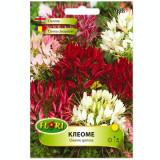 Seminte de cleoma floare paianjen Florian 0.7 grame