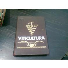 VITICULTURA - T. MARTIN