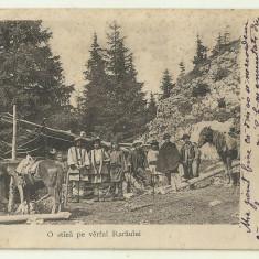 Cp Romania : O stana in varful Raraului - circulata 1906
