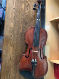 VIOARA VECHE  55 cm