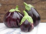 Seminte Vinete Black beauty, 1 gr.