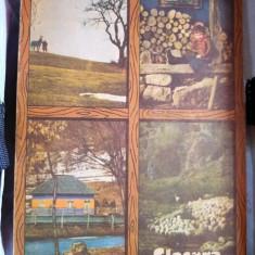 Almanah Flacăra 1982
