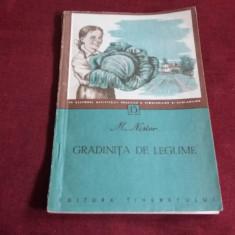 M NISTOR - GRADINITA DE LEGUME