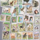 KOREA NORD LOT 40 TIMBRE ANIMALE FAUNA, Stampilat