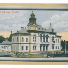 4543 - TARGU-JIU, Primaria, Romania - old postcard - unused, Necirculata, Printata
