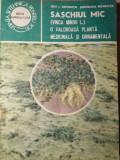 SASCHIUL MIC (VINCA MINOR L.) O VALOROASA PLANTA MEDICINALA SI ORNAMENTALA - ION