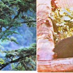 Fauna, Ursi, Maxime