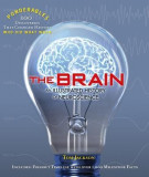 The Brain: An Illustrated History of Neuroscience