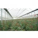 Folie Solar Politiv, Clear Uva Ir+Eva+Af/Ad, 0.150 Mm, E2181