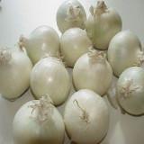 Seminte ceapa Noordholandse, 25 gr