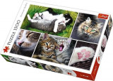 Puzzle Trefl 1500 Viata Pisicilor