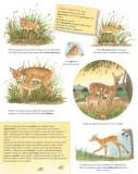 Vino cu noi in natura! Pui de animale  