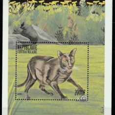 Africa Centrala 1999 - Pisici, colita neuzata