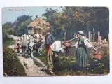 RUSIA IMPERIALA 1911 - PERSONAJE DE EPOCA - PEISAJ RURAL - ANIMATIE - CAR CU BOI, Circulata, Fotografie