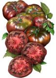 Tomate , rosii soiul BLACK KRIM - 10 seminte pentru semanat