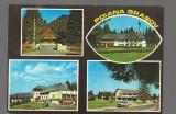 CPIB 17296 CARTE POSTALA - POIANA BRASOV. MOZAIC, Necirculata, Fotografie