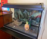 Acvariu Pești