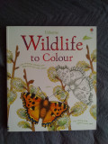Carti de colorat Usborne pentru copii si parinti