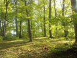 Teren pădure + pasune, Teren intravilan