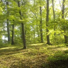 Teren pădure + pasune