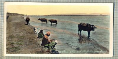 AD 591 C. P. VECHE - RIVER NILE AND BUFFALOES NEAR ESNAH -EGYPT foto