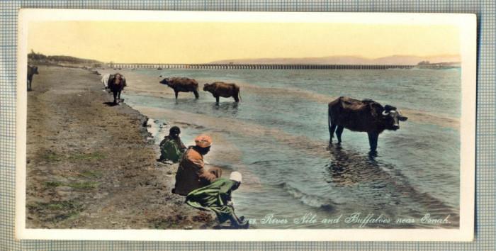 AD 591 C. P. VECHE - RIVER NILE AND BUFFALOES NEAR ESNAH -EGYPT