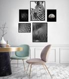 Cumpara ieftin Set 5 tablouri decorative Zebra BW, Heinner
