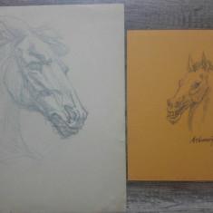 Cap de cal// creion pe hartie, 2 lucrari originale Marcel Chirnoaga, Peisaje, Acuarela, Altul