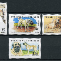 TURCIA 2017 ANIMALE DOMESTICE CAINI PISICI CAI