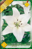 Crin White ( 1 bulb )