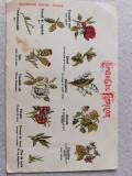 Carte postala litografie cca. 1900, Limbagiul florilor, necirculata, UPU
