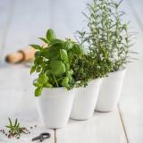 Cumpara ieftin Ghiveci triplu alb fara farfurie Keter Ivy Herbs 2.5 L