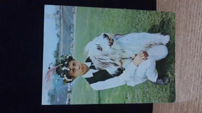 Colecția câini de rasă-Ciobănesc românesc Mioritic foto