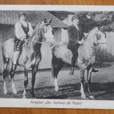 Carte postala hipism ; Grajdul Doctor Serban de Voila , interbelica , cai