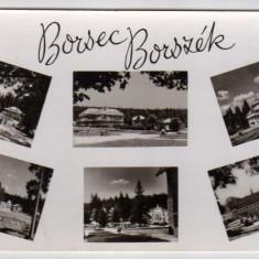 MOZAIC BORSEC BORSZEK RPR