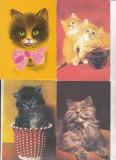 bnk cp Lot 16 carti postale si felicitari - pisici