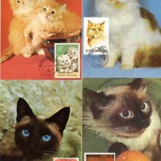 Fauna, Pisici, Maxime