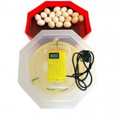 Incubator cu termometru CLEO 5T
