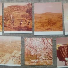 Lot 7 fotografii agricultura// propaganda comunista, dimensiuni mici