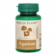 Agaricus, 60cps, Dacia Plant
