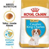 ROYAL CANIN CAVALIER KING CHARLES JUNIOR - 1,5 kg