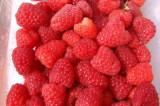 Przehyba-zmeura fruct mare