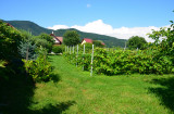Teren intravilan 1000 mp, sat Bistrita, comuna Alexandru cel Bun