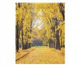 Cumpara ieftin Jaluzea tip rulou Forever Autumn 80x180 cm - Blindecor, Alb