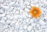 Piatra naturala decorativa