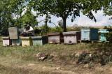 Vand stupi cu familii de albine