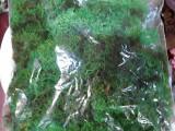 Licheni ( muschi) naturali stabilizati punga 250 gr verde
