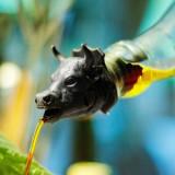 Dop cu picurator - Bull | Suck Uk