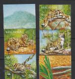 Fauna,feline ,WWF,Malaezia.