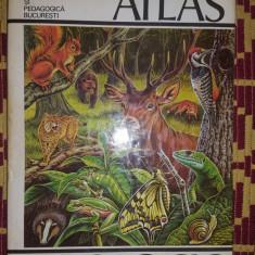 atlas zoologic an1980/240pagini- constantin bogoescu